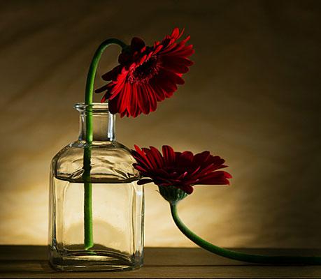 Still life photography ideas - عکاسی از اجسام بی جان