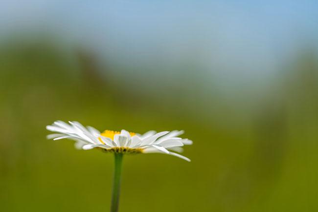 Nature Photography - شاتر دوربین و ديافراگم دوربین در عكاسي