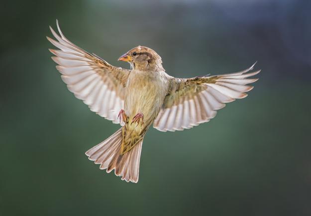 bird - راهنمای خرید دوربین DSLR