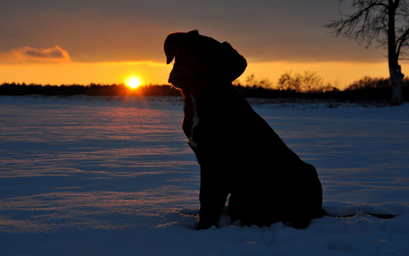 dog flash - کاربرد فلاش در عکاسی