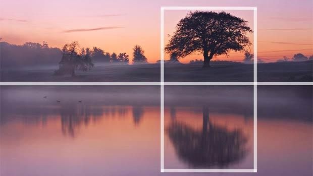 tree photography - آموزش ترکیب بندی در عکاسی