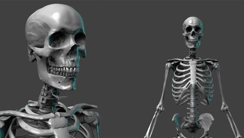 Skel Lead In - کاربردهای زیبراش در علوم