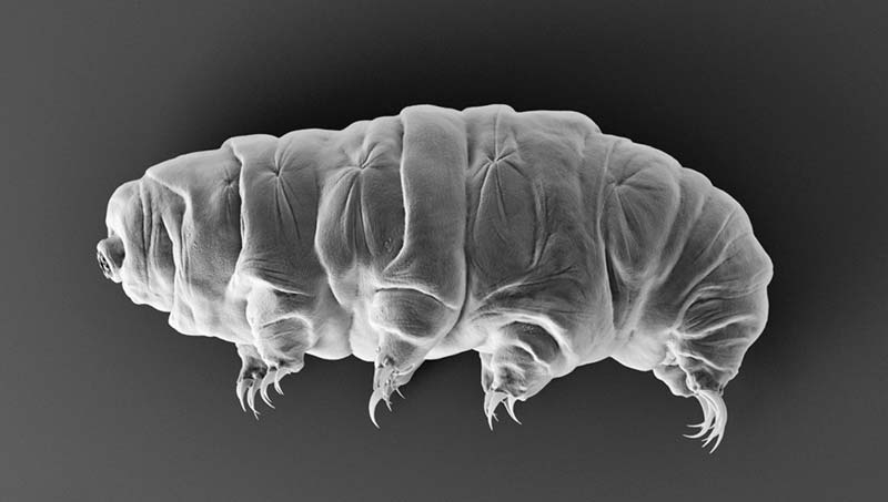 Tardigrade Lead In - کاربردهای زیبراش در علوم