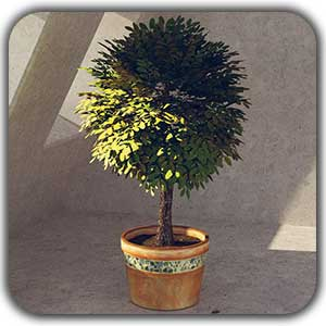 plants 3d - ماکت سازی چیست؟