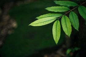 akasi tabiat36 - نحوه ی عکاسی از طبیعت