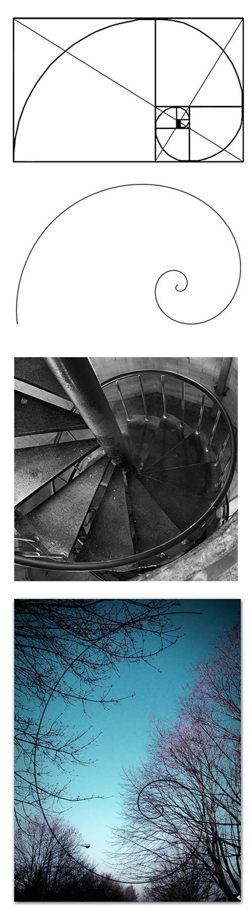 golden spiral 2 - نسبت طلایی در عکاسی