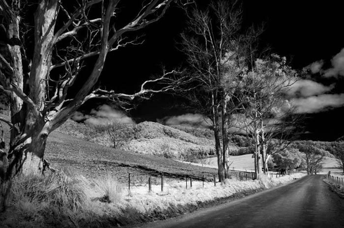 nature photography infrared - نکاتی در خصوص تغییر یک دوربین قدیمی وعکاسی مادون قرمز