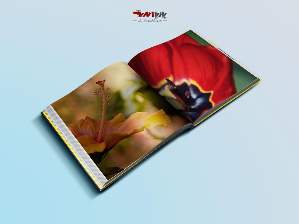 Beginner Guide to Abstract Flower Photography - راهنمای تازه کاران در عکاسی انتزاعی گل ها