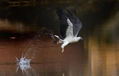Birds in Flight photography birds 3 - 5 روش برای عکس برداری از پرندگان