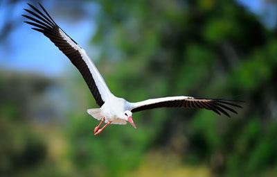 Birds in Flight photography birds 5 - 5 روش برای عکس برداری از پرندگان