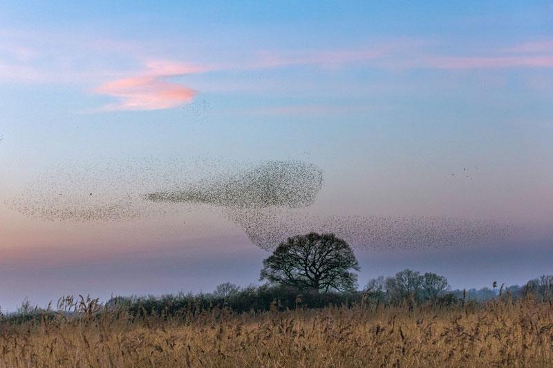 Flocks photography birds 1 - 5 روش برای عکس برداری از پرندگان