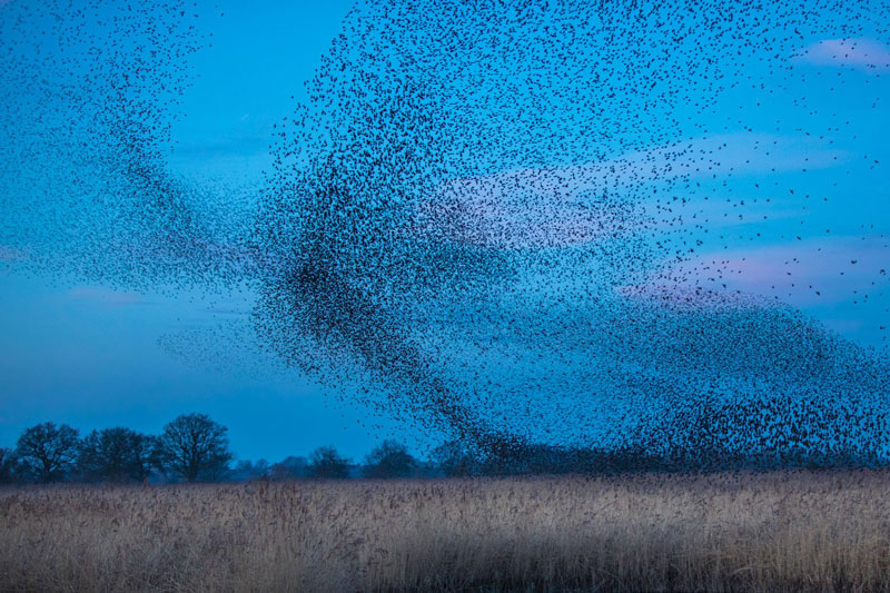 Flocks photography birds 2 - 5 روش برای عکس برداری از پرندگان