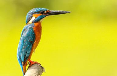 Get Close 4 photography birds  - 5 روش برای عکس برداری از پرندگان