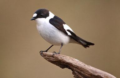 Get Close 5 photography birds  - 5 روش برای عکس برداری از پرندگان