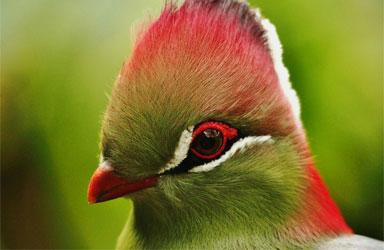 Get Close 7 photography birds  - 5 روش برای عکس برداری از پرندگان