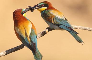 Get Close 8 photography birds  - 5 روش برای عکس برداری از پرندگان