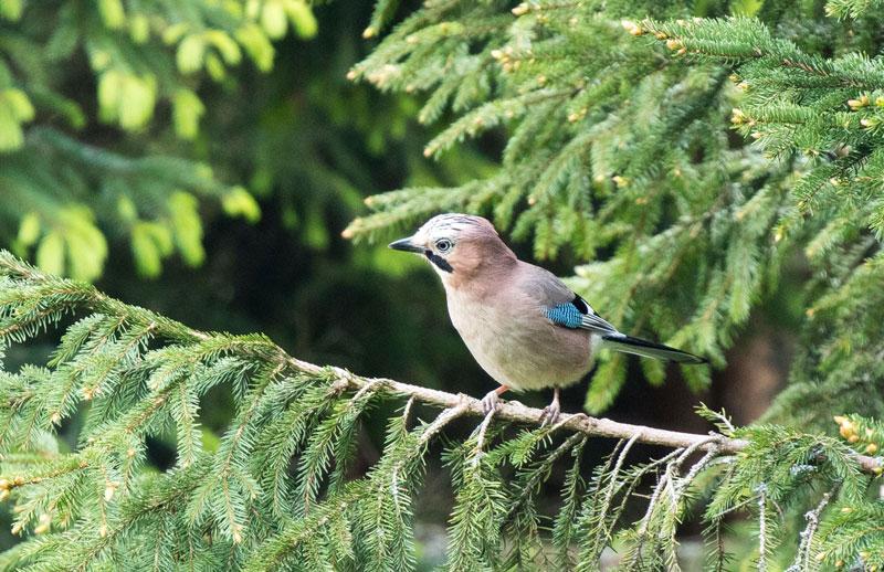 In your garden photography birds - 5 روش برای عکس برداری از پرندگان