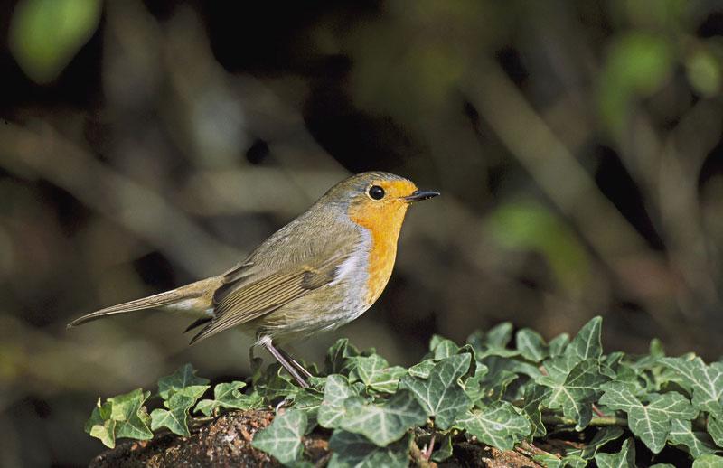 In your garden photography birds 2 - 5 روش برای عکس برداری از پرندگان