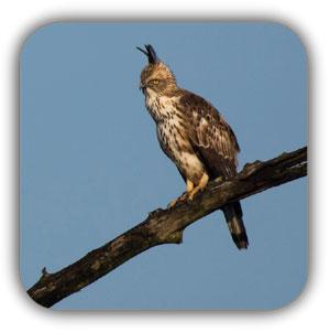 عکس برداری از پرندگان