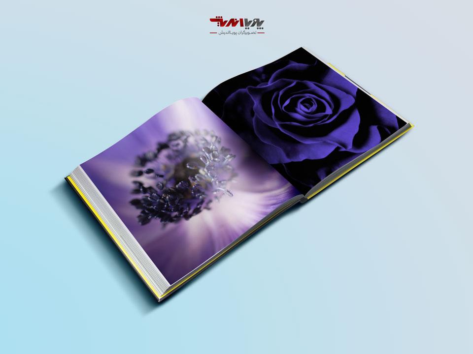 depth of field - راهنمای تازه کاران در عکاسی انتزاعی گل ها