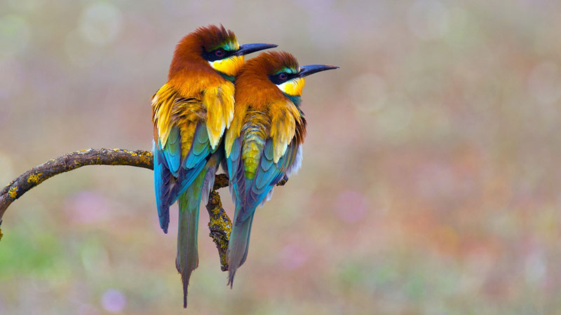go wild 3 photography birds  - 5 روش برای عکس برداری از پرندگان