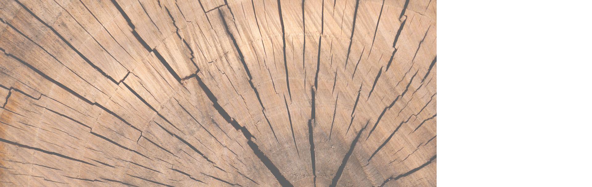 wood slider 0 - آموزش پیکر تراشی با چوب ، مجسمه سازی با چوب