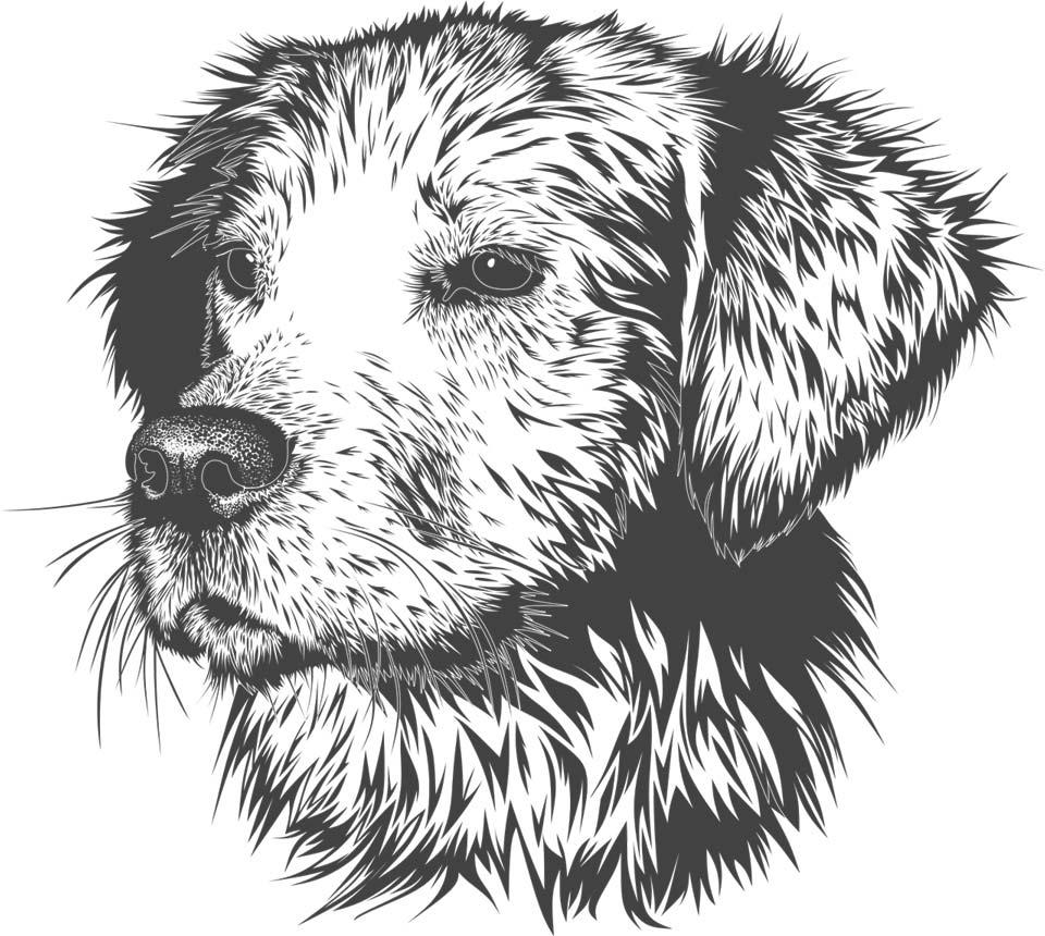 dog drawing - تفاوت طراحی دیجیتال با نقاشی دیجیتال :