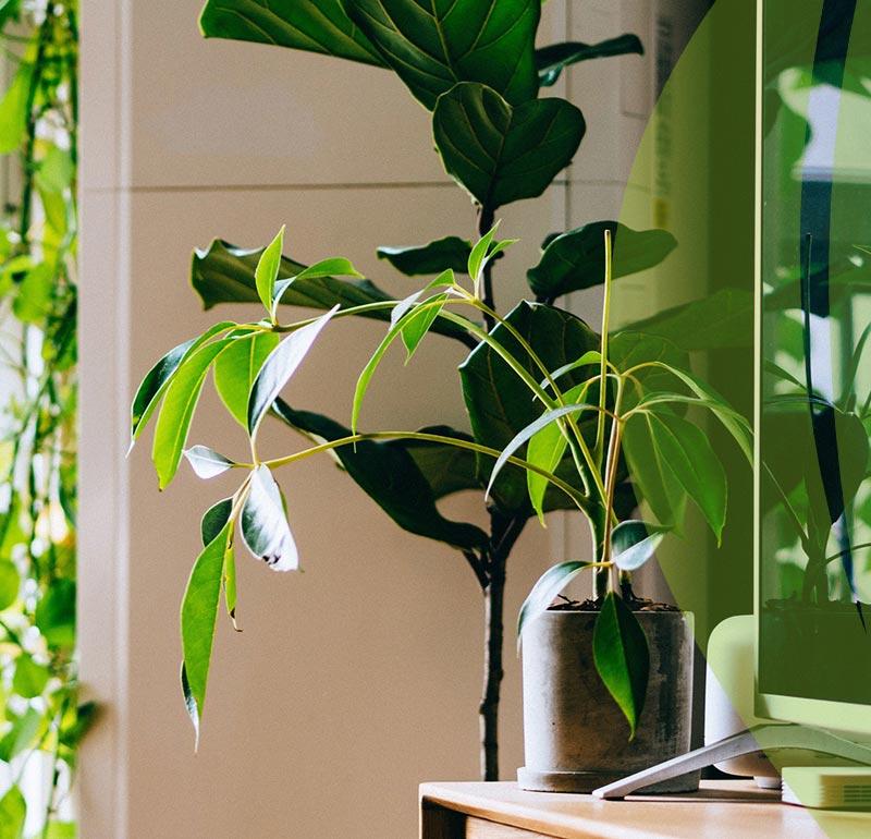 Environmentally Friendly interior design 3 - طراحی داخلی سازگار با محیط زیست