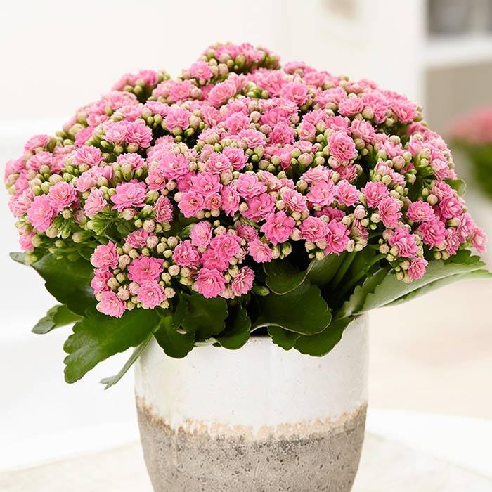 plants for appartment 11 - گیاه های آپارتمانی در دکوراسیون داخلی