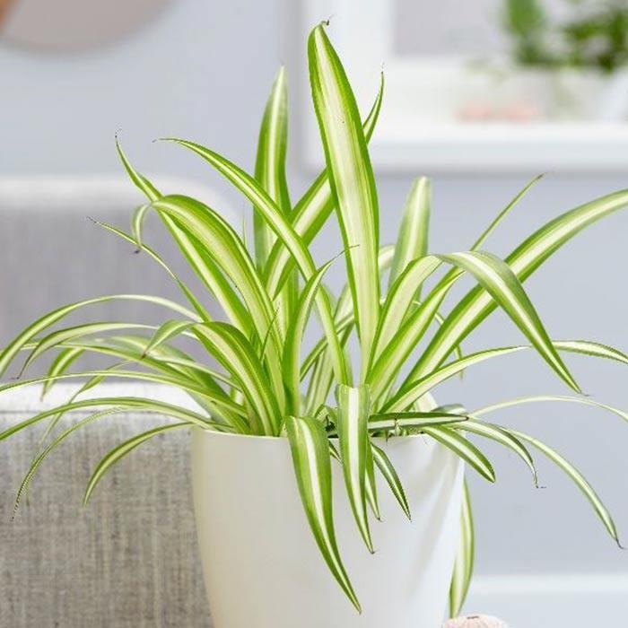 plants for appartment 12 - گیاه های آپارتمانی در دکوراسیون داخلی