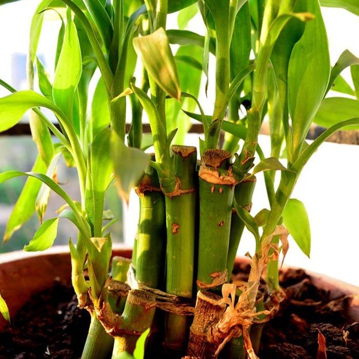 plants for appartment 13 - گیاه های آپارتمانی در دکوراسیون داخلی