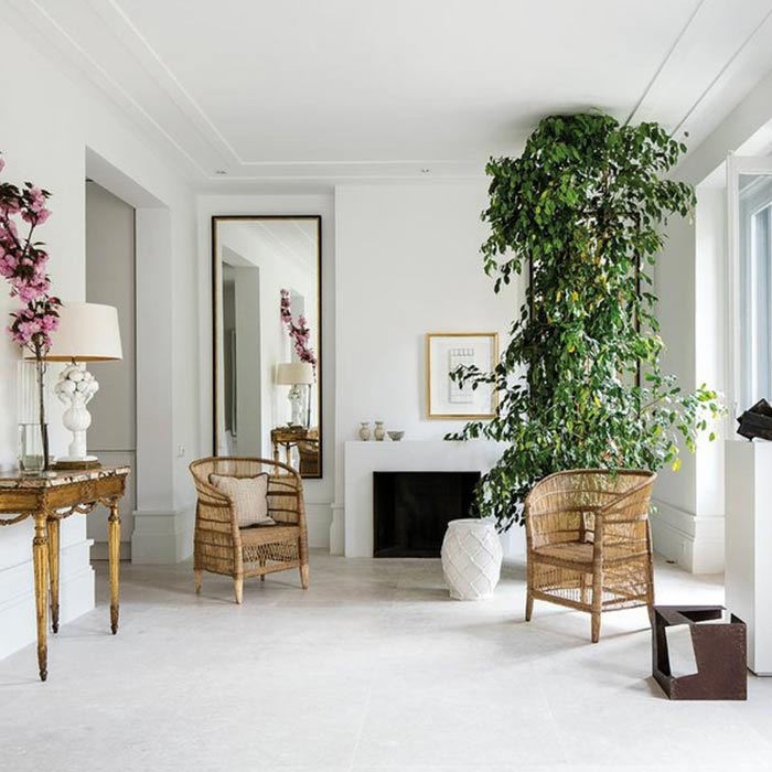 plants for appartment 14 - گیاه های آپارتمانی در دکوراسیون داخلی