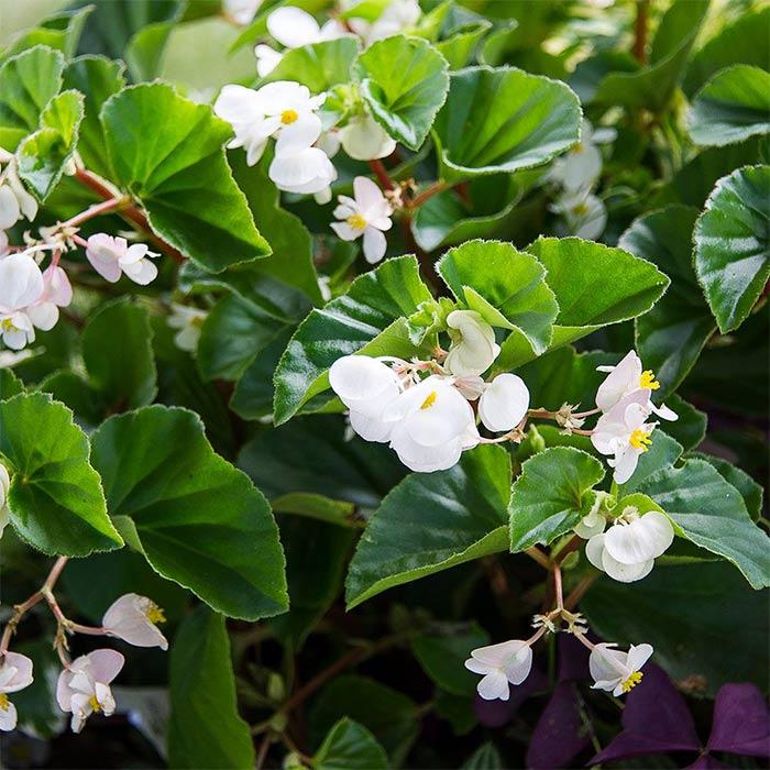 plants for appartment 18 - گیاه های آپارتمانی در دکوراسیون داخلی