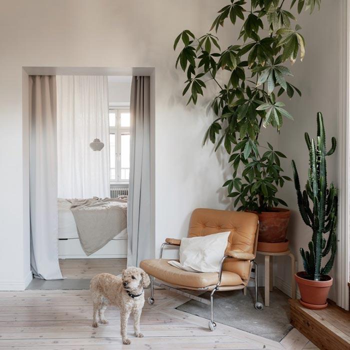 plants for appartment 2 - گیاه های آپارتمانی در دکوراسیون داخلی