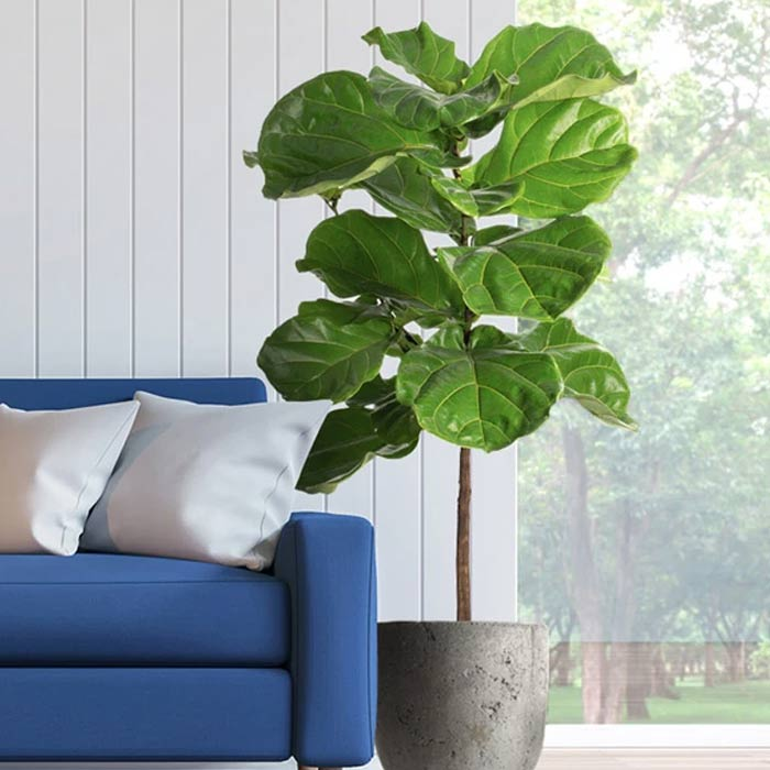 plants for appartment 20 - گیاه های آپارتمانی در دکوراسیون داخلی