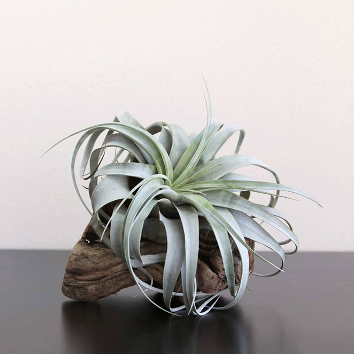 plants for appartment 21 - گیاه های آپارتمانی در دکوراسیون داخلی