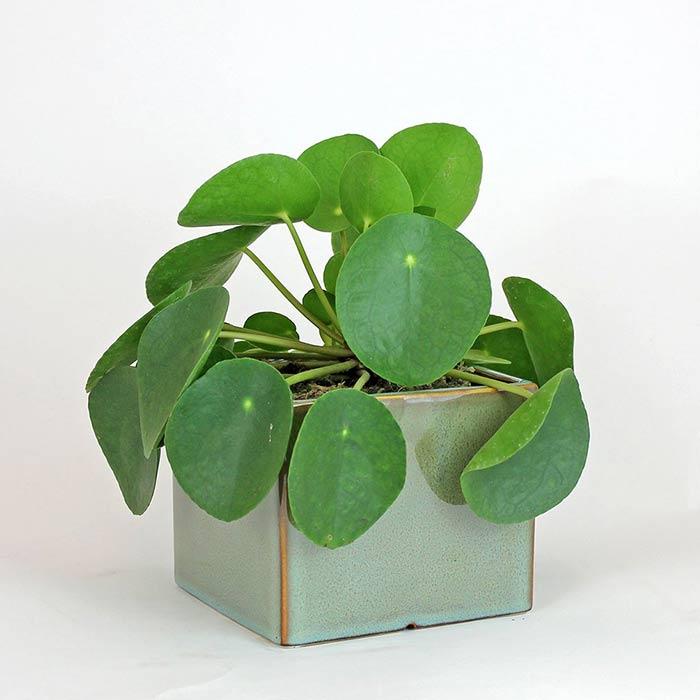 plants for appartment 22 - گیاه های آپارتمانی در دکوراسیون داخلی