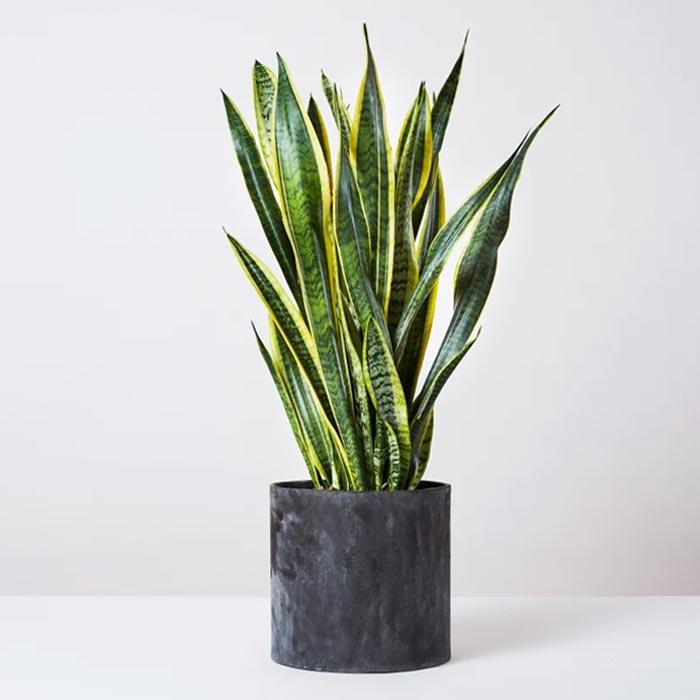 plants for appartment 6 - گیاه های آپارتمانی در دکوراسیون داخلی