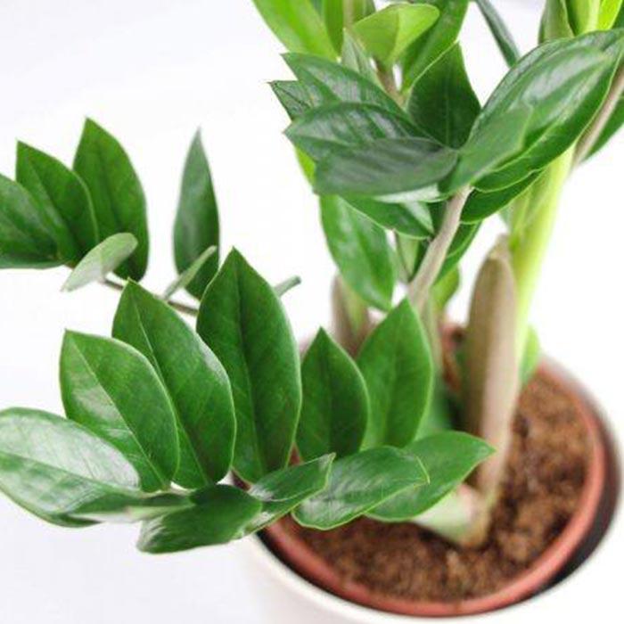 plants for appartment 7 - گیاه های آپارتمانی در دکوراسیون داخلی