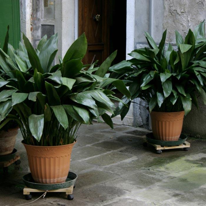 plants for appartment 8 - گیاه های آپارتمانی در دکوراسیون داخلی