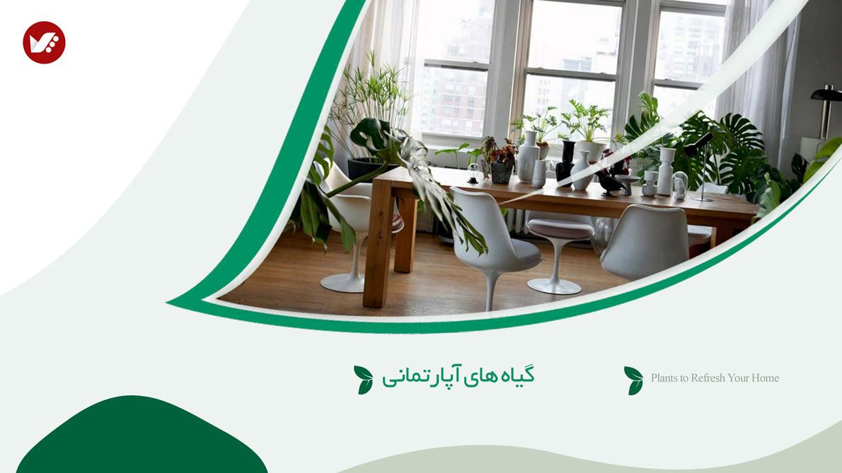 plants for appartment banner - گیاه های آپارتمانی در دکوراسیون داخلی