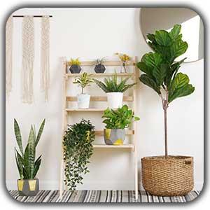 گیاه های آپارتمانی