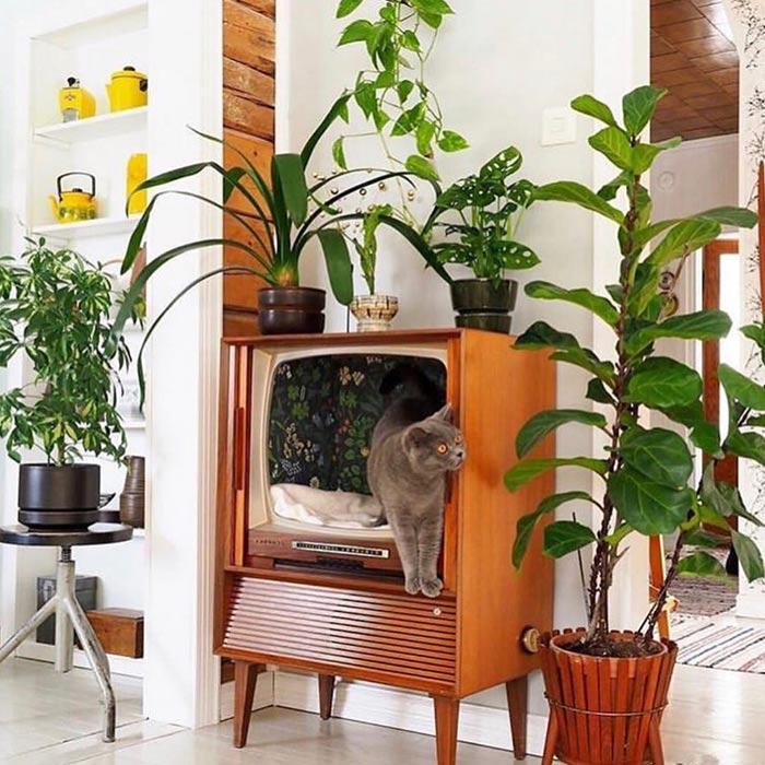 interior design suitable for pets 10 - طراحی دکوراسیون داخلی برای آنها که حیوانات خانگی دارند