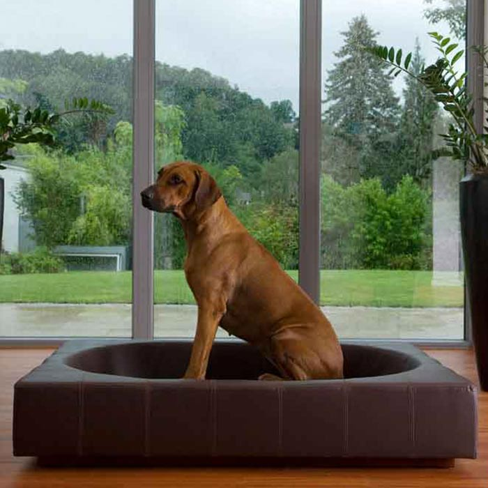 interior design suitable for pets 4 - طراحی دکوراسیون داخلی برای آنها که حیوانات خانگی دارند