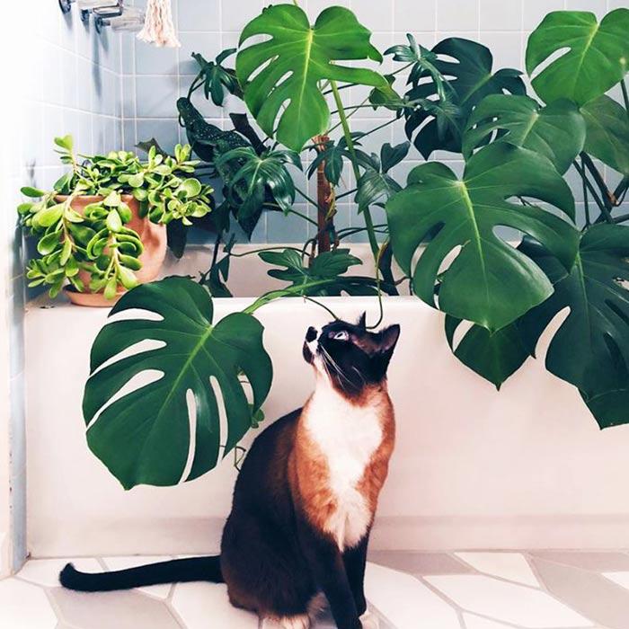 interior design suitable for pets 5 - طراحی دکوراسیون داخلی برای آنها که حیوانات خانگی دارند
