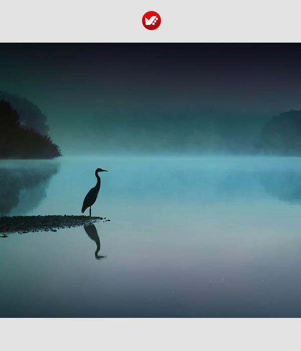 zen photography 111 - عکاسی و مراقبه ذن