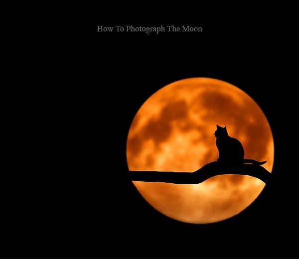 گربه در ماه